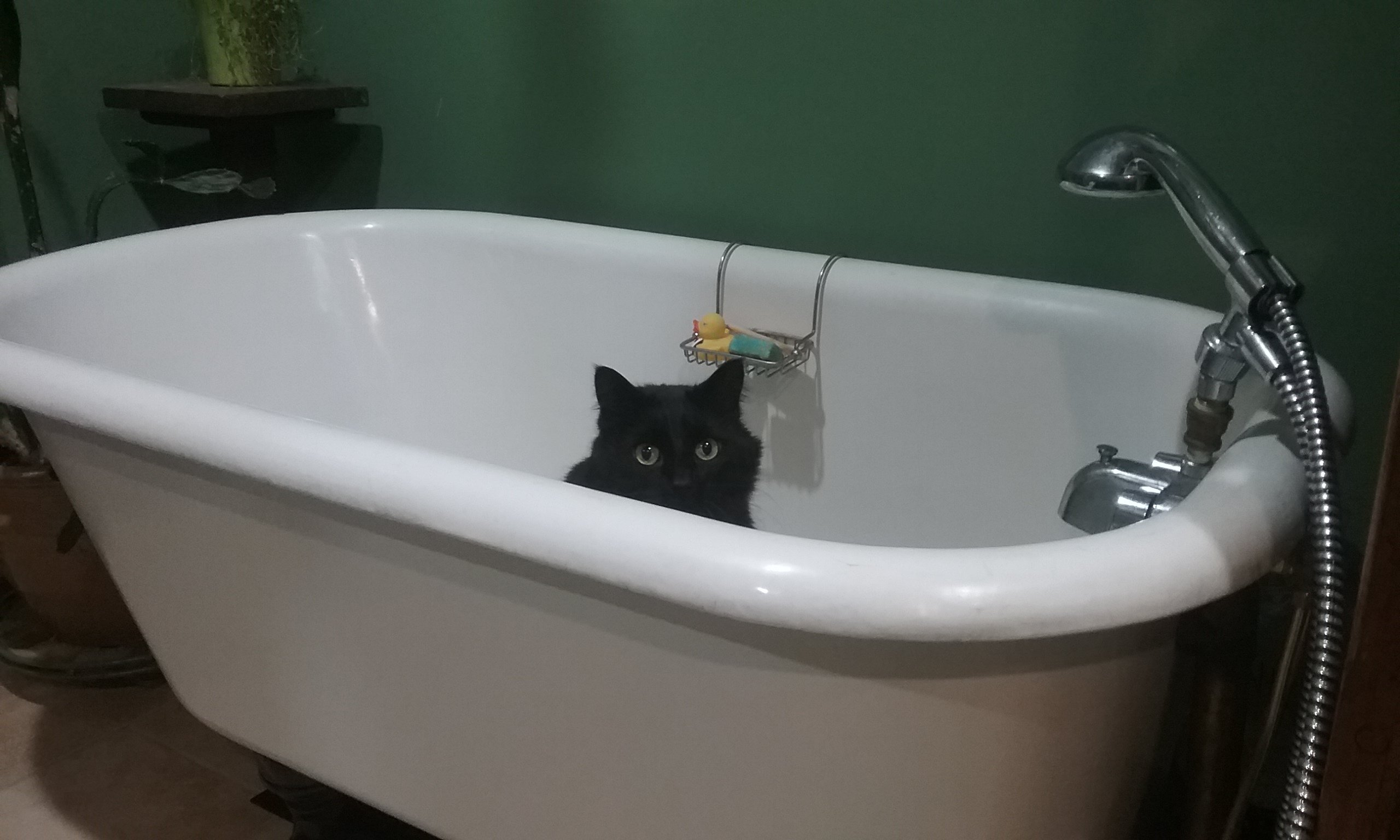 Cat Got Your Tub?