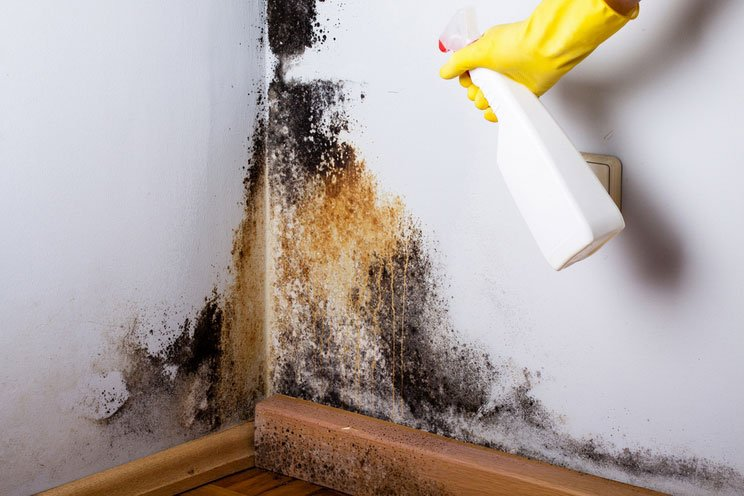 How-to-Get-Rid-of-Black-Mold.-Disinfectants-That-Banish-Black-Mold.jpg