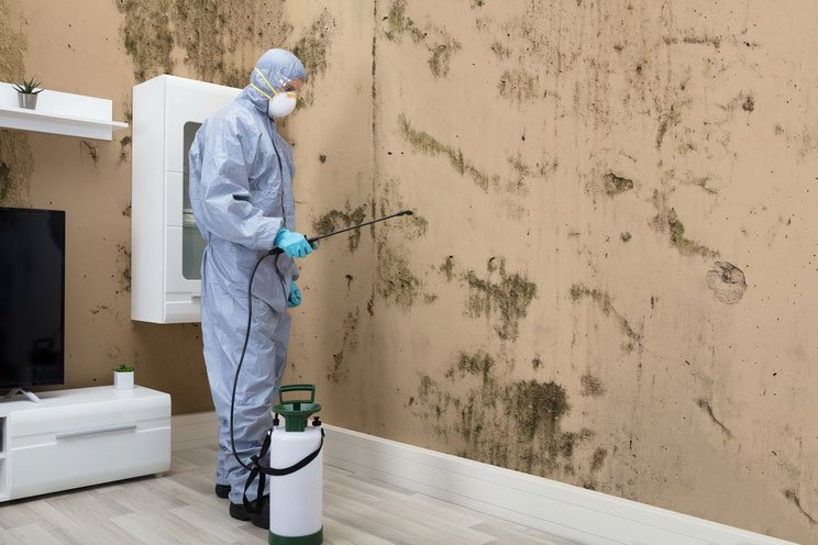 How-to-Get-Rid-of-Black-Mold.-Professional-Treatment.jpg