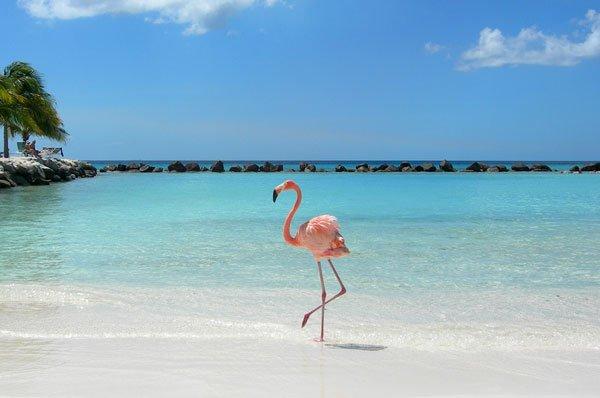 플라밍고가 핑크색인 이유.jpg | 인스티즈