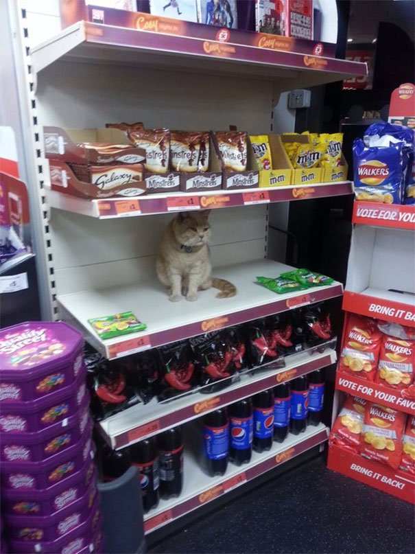 Security Tried To Get This Cat Out Of My Local Supermarket. Failed