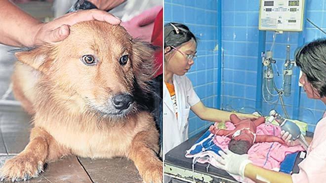 perro-heroe-salva-bebe-prematuro-tirado-basura-1