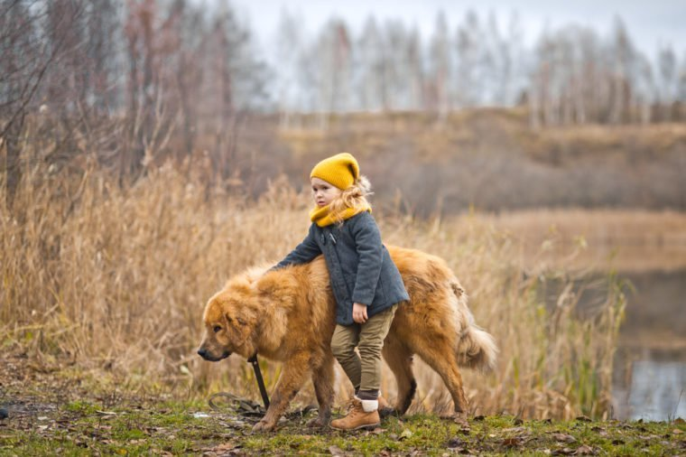 The walk of a child with a big dog on the lake.