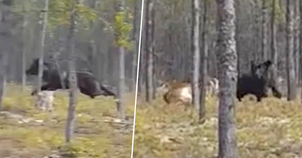 a 8.jpg?resize=574,582 - Filmagem captura momento aterrorizante em que um lobo gigante persegue um cão na frente do dono