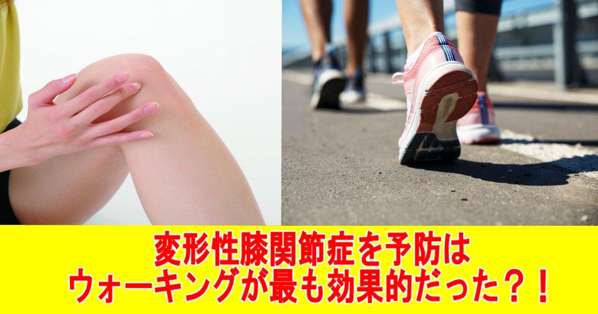 aa.jpg?resize=300,169 - 変形性膝関節症を予防はウォーキングが最も効果的だった?!
