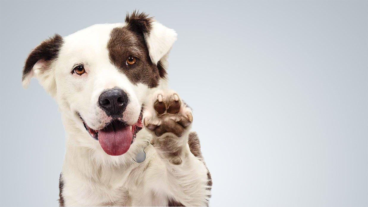 ac21c595e54a9a69f99ed4cbd2e1cc4a.jpg?resize=300,169 - Campanha nos Estados Unidos quer que as pessoas adotem cães abandonados ao invés de comprar armas
