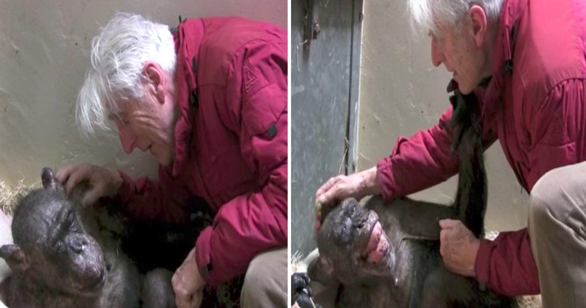 agsa.jpg?resize=636,358 - Ce vieux chimpanzé de 59 ans a reçu la visite d'un vieil ami sur son lit de mort, et n'a pas pu contenir sa joie.