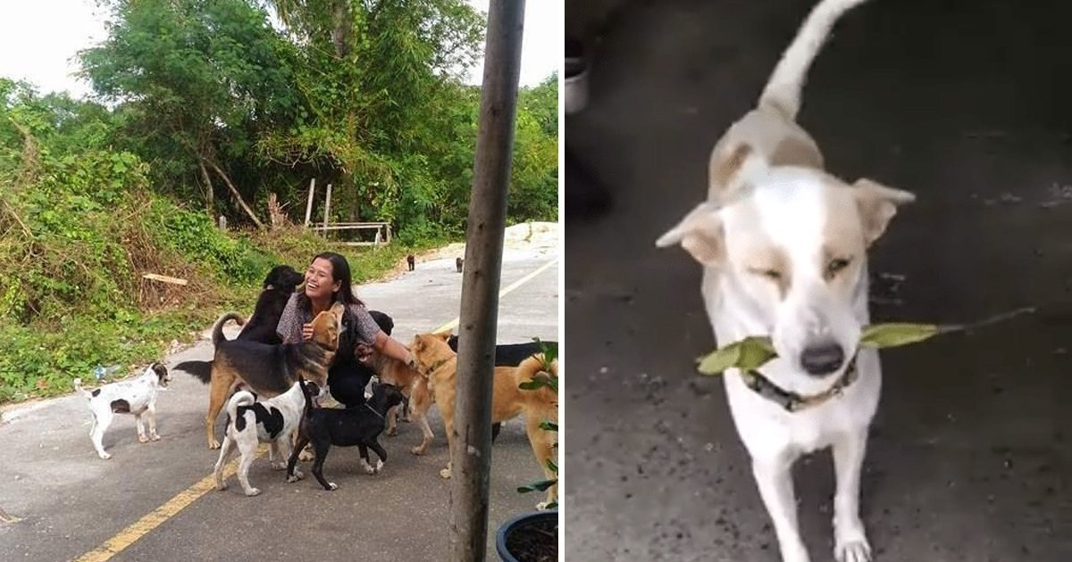 aha 1.jpg?resize=1200,630 - This Stray Dog Keeps Bringing Gifts To The Woman Who Feeds Him