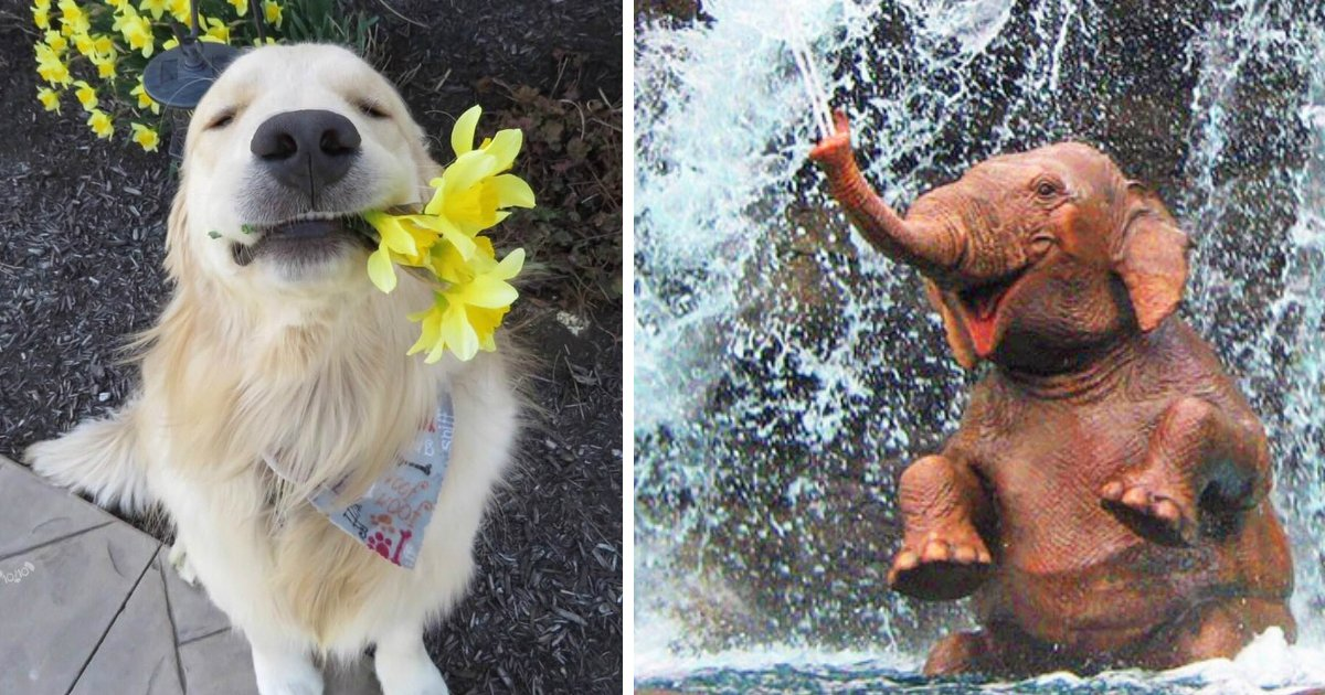 animal difficult day.jpg?resize=636,358 - 21 Photos That Can Make You Feel Better Even on a Very Difficult Day