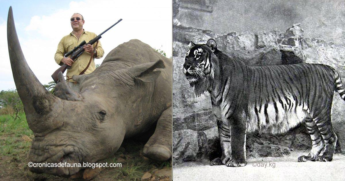 animales.jpg?resize=300,169 - Estos 7 animales se extinguieron por culpa de la humanidad