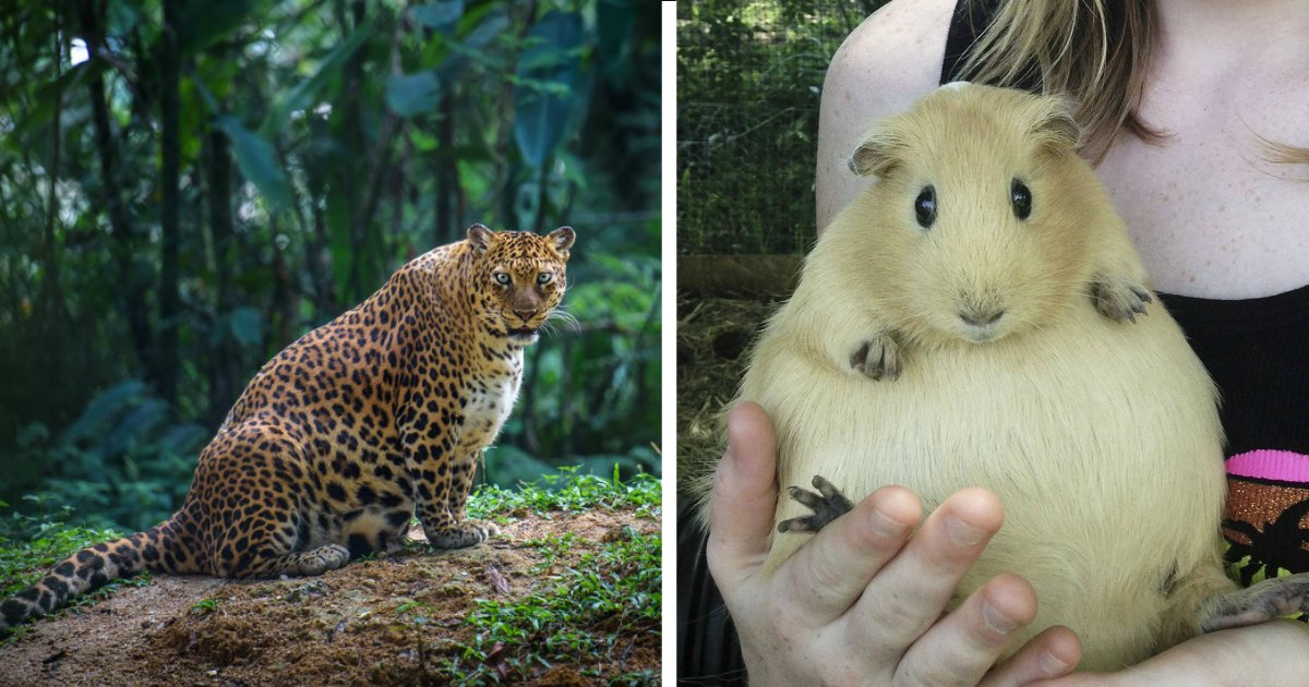animals giving birth.jpg?resize=1200,630 - So sehen 24 Tiere aus, bevor sie gebären.