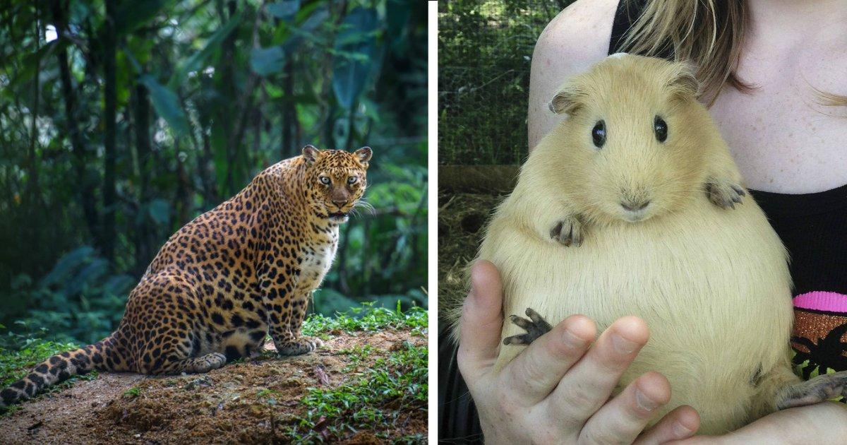 animals giving birth.jpg?resize=412,232 - 22个小动物的怀胎身姿