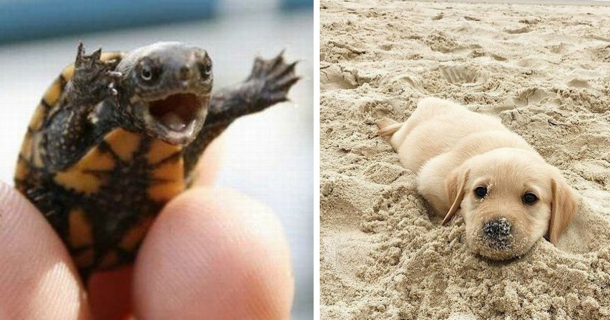 animals happy.jpg?resize=636,358 - 24 Animal Photos That Won't Let Us Feel Sad