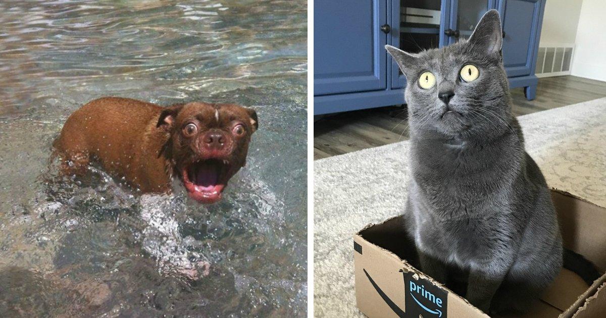 animals oscar.jpg?resize=1200,630 - 21 Emotional Animals Who Deserve an Oscar