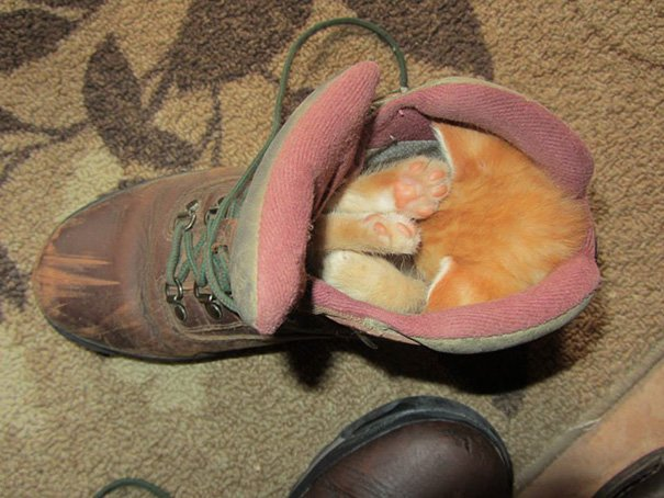 The Runt Of The Litter Likes To Sleep In My Hiking Boot