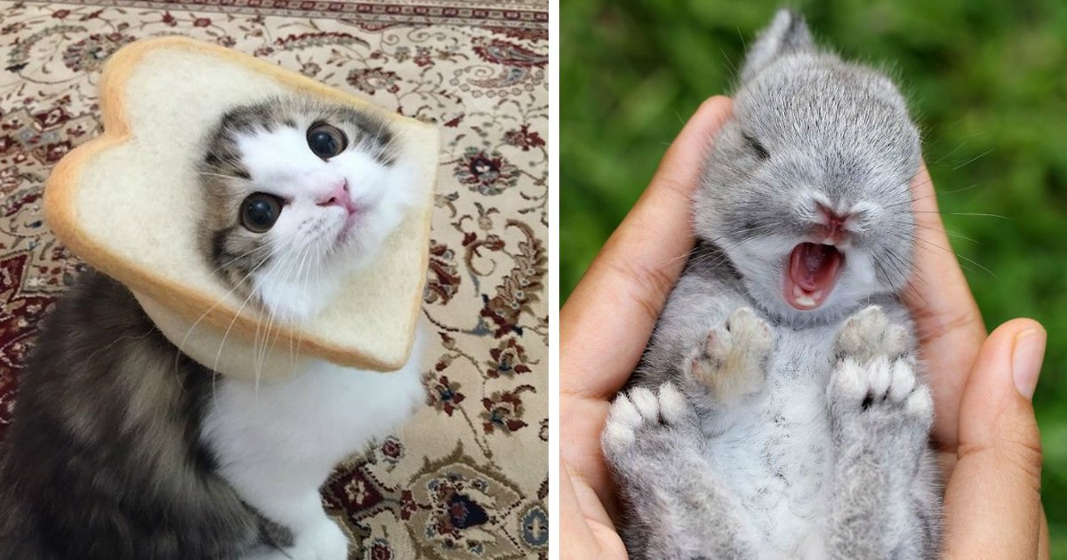 animals wont sad.jpg?resize=636,358 - 24 Photos That Could Convince the Most Anti-Pet Person to Get a Furry Friend