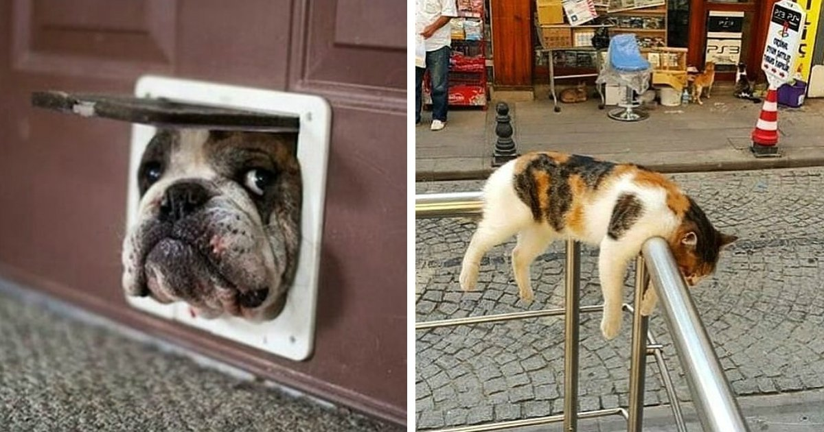 animals.jpg?resize=636,358 - Internet Users Share Pics of Their Pets Acting Too Weird for Words