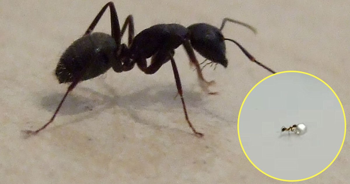 ant walk off with a diamond.jpg?resize=1200,630 - Ant Caught On Camera Walking Off With A Diamond Inside A Jewelry Shop