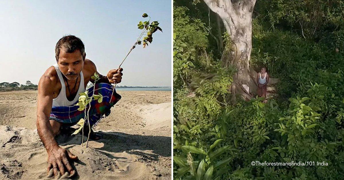 arbol.jpg?resize=648,365 - Este hombre convirtió un desierto en un bosque plantando un árbol todos los días durante 40 años
