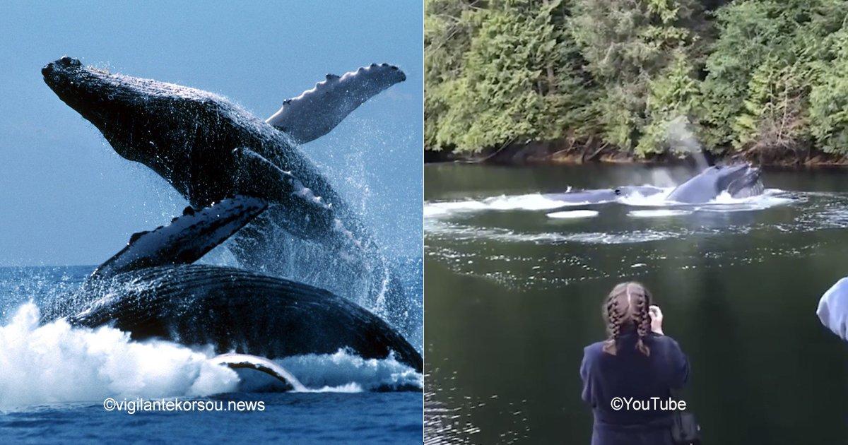 ballenas.jpg?resize=300,169 - Estás ballenas jorobadas asombraron a una familia por su espectacular aparición
