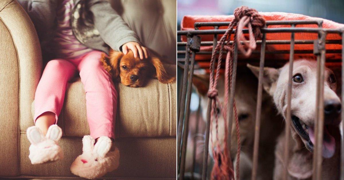 ban dog meat.jpg?resize=412,232 - Des militants demandent au gouvernement d'interdire la consommation, l'importation et l'exportation de viande de chien en Grande-Bretagne