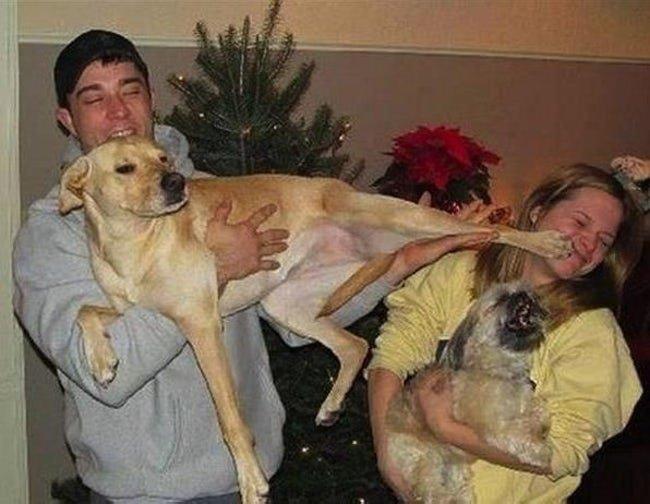 c4 2.jpg?resize=300,169 - 12 vezes hilárias em que os animais de estimação arruinaram fotos de família