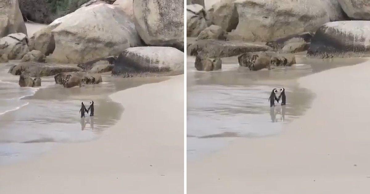 capa00000tfrud.png?resize=1200,630 - Casal de pinguins é flagrado de mãos dadas em uma praia, em clima de romance