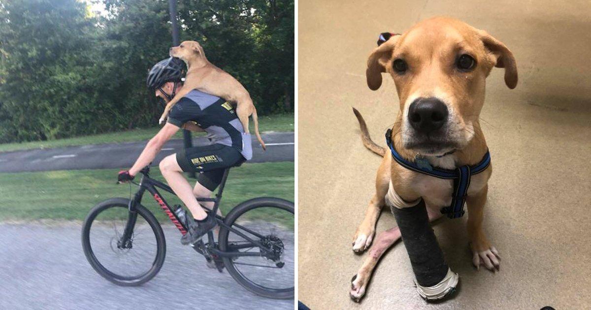 capa13.png?resize=1200,630 - Ciclista carrega cão atropelado e ferido em suas costas e salva sua vida