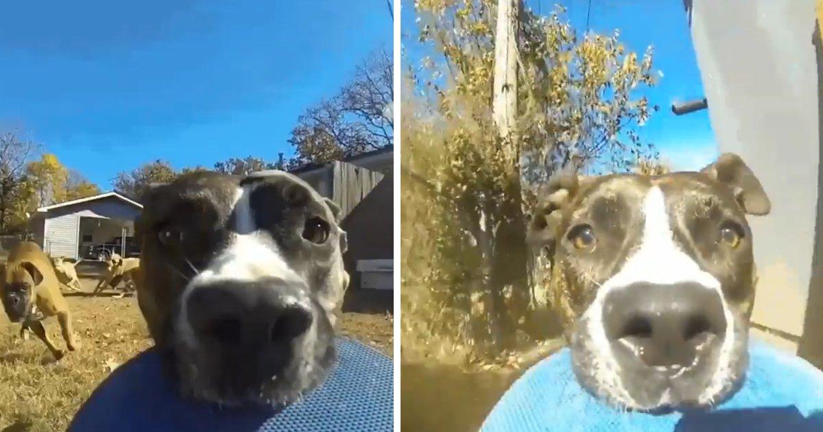 capa5.png?resize=300,169 - Cachorro rouba a câmera filmadora do dono e se filma correndo pelo quintal