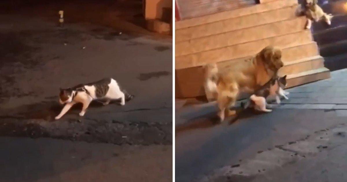 capa56800.png?resize=412,232 - Cachorro impede gato de entrar em uma briga de um jeito muito hilário