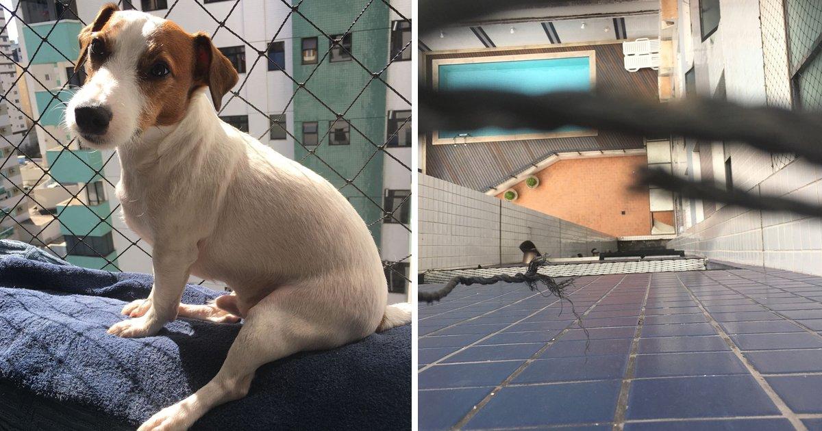 capa76489.png?resize=300,169 - Abençoado: Cachorrinho cai do 7º andar de um prédio e não se machuca