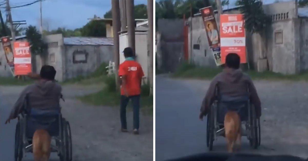 capa764894567r.png?resize=1200,630 - Vídeo emocionante mostra cachorro empurrando a cadeira de rodas de dono com paralisia