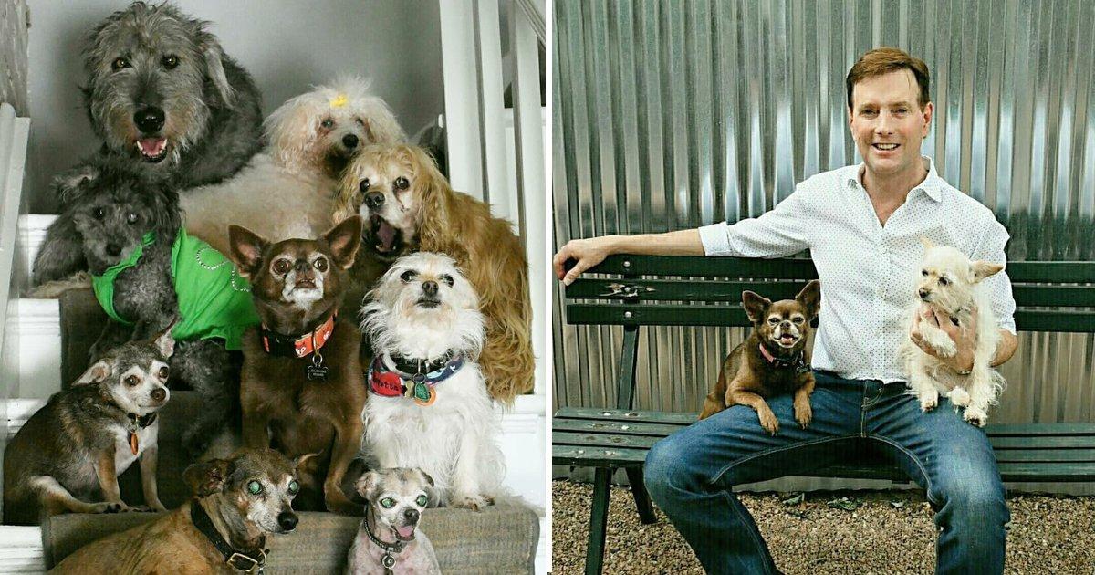 capa988.png?resize=1200,630 - Homem dedica sua vida a adotar cachorros velhinhos de abrigos que nunca teriam um lar