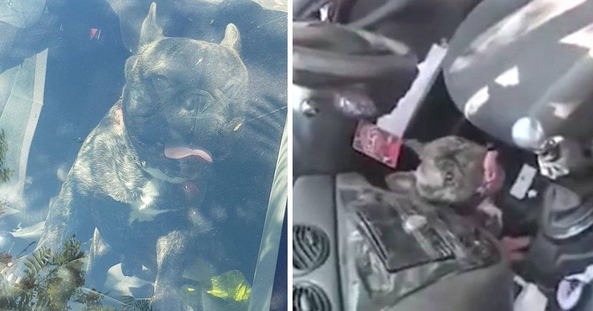 capa99.png?resize=648,365 - Cachorro é deixado dentro de carro em altas temperaturas, moradores decidem resgatar o animal e são ofendidos pelo dono