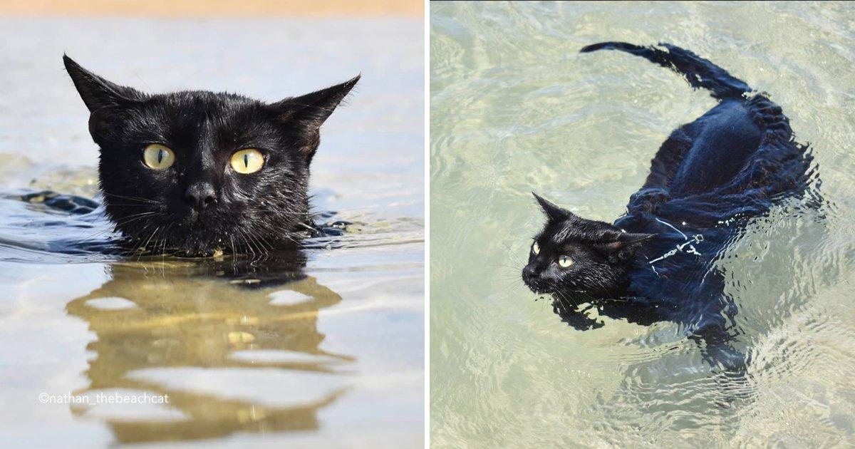 cat 2.jpg?resize=300,169 - Conoce a Nathan, el gato al que le gusta nadar en el océano