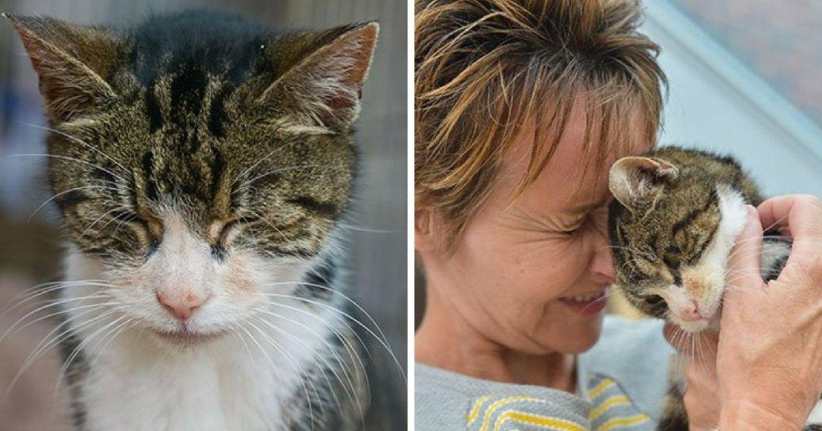 cat6.png?resize=412,232 - Un chat de 17 ans a retrouvé sa maison après avoir été porté disparu pendant 13 longues années