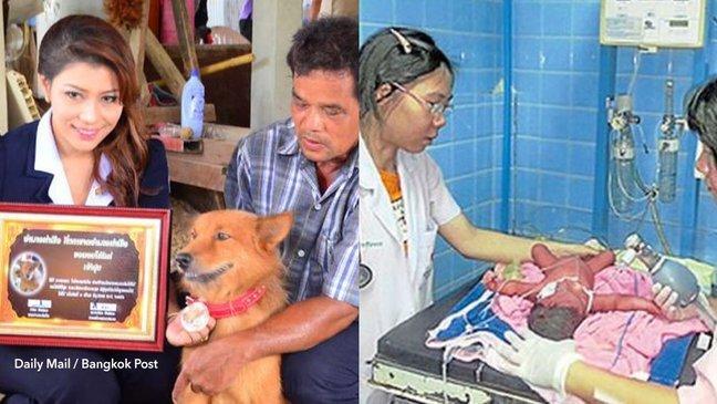 cov 1 21 png.jpg?resize=300,169 - Cachorro salva a vida de uma bebê prematura que havia sido jogada no lixo