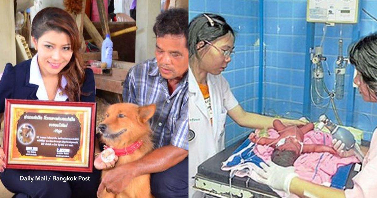 cov 1 21.png?resize=648,365 - El acto heroico de un perro que salvó la vida de una bebé prematura que había sido arrojada a la basura