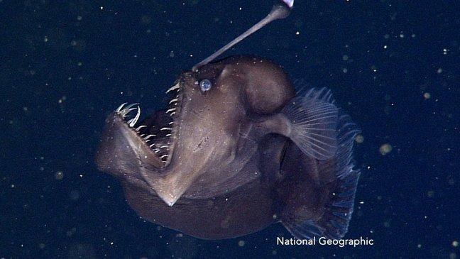 cover 46.jpg?resize=1200,630 - 10 imagens surpreendentes que farão com que você tenha terror das águas do mar