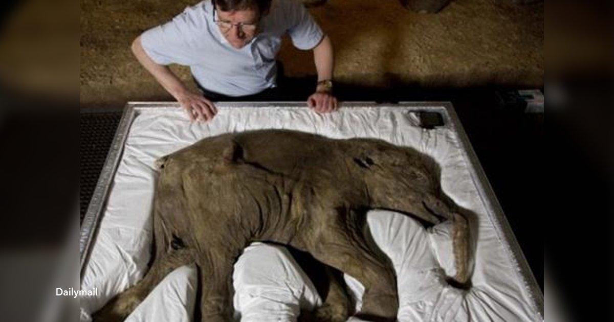 cover22 13.png?resize=300,169 - Biólogos tienen planeado resucitar al mamut lanudo en 2019