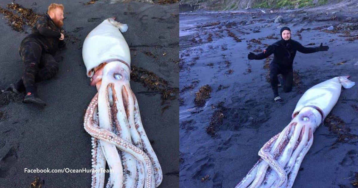 cover22 14.png?resize=300,169 - Hallaron un monstruoso calamar gigante de cuatro metros en Nueva Zelanda