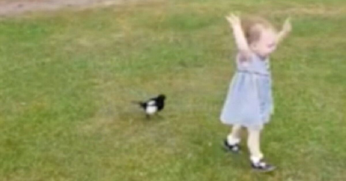 cutie.png?resize=412,232 - Bird Started Chasing Little Girl In The Park While Onlookers Watched In Amusement