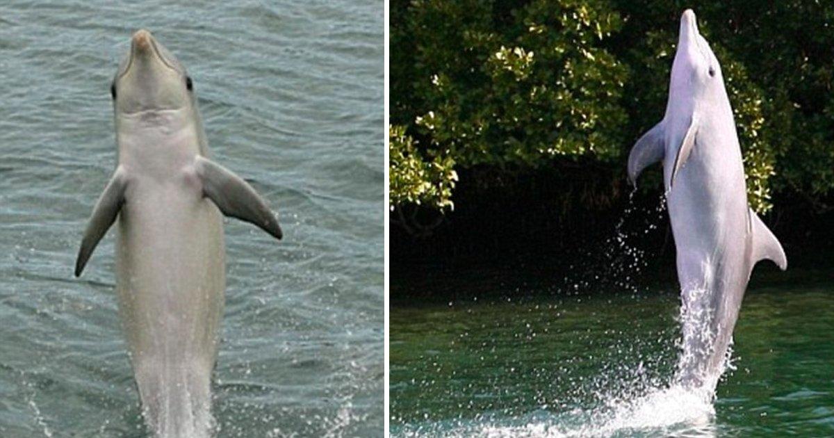 czz.jpg?resize=412,232 - Un dauphin a appris un tour en captivité qui peut sauver l'espèce de la mort et l'a montré à ses amis dans le monde