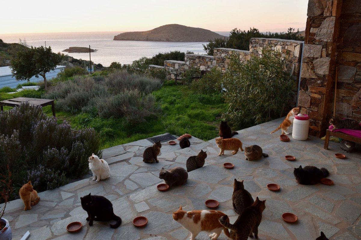 dkkunnlu4aaths .jpg?resize=1200,630 - Já imaginou trabalhar tomando conta de 55 gatinhos em uma belíssima ilha grega? Isso é possível!