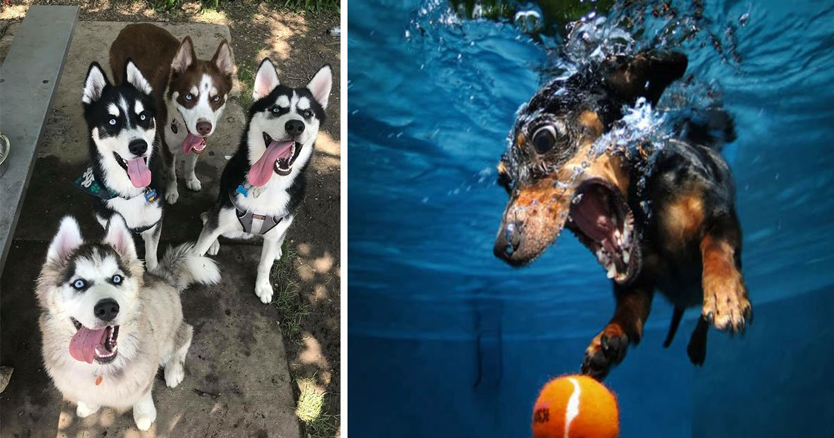 dog funny photo 22.jpg?resize=1200,630 - Ces photos de chiens prises au bon moment sont trop hilarantes