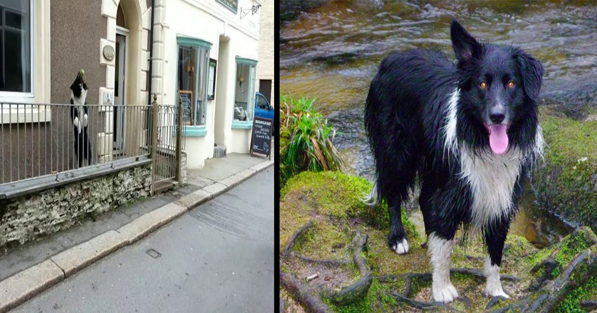 dog passes ball gate.jpg?resize=1200,630 - This Friendly Dog Always Wants To Play 'Catch' When People Walk Past His Gate