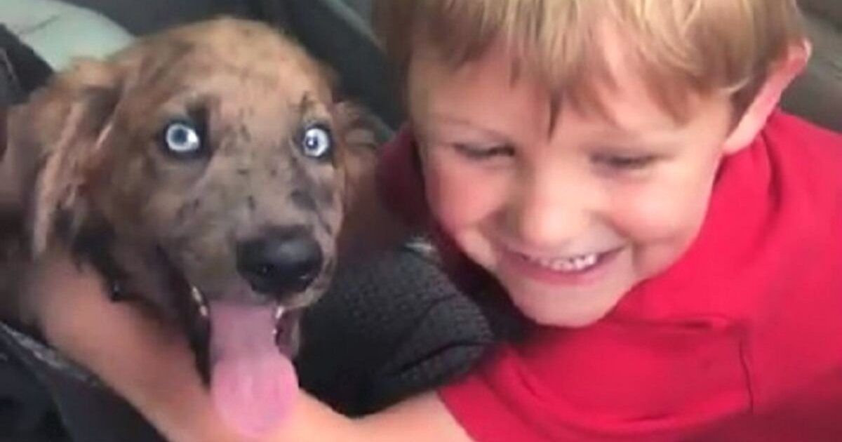 doggo.png?resize=1200,630 - Little Boy And Rescued Puppy Instantly Became Best Friends