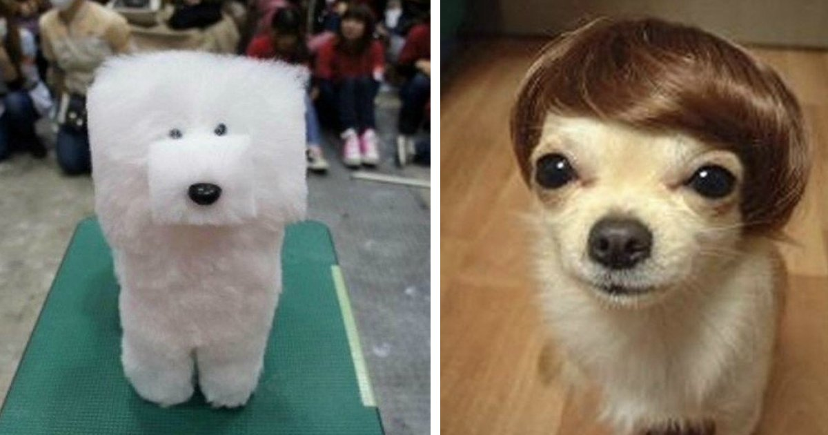dogs haircut.jpg?resize=1200,630 - 17 Times Pet Haircuts Went So Wrong, It's Hilarious