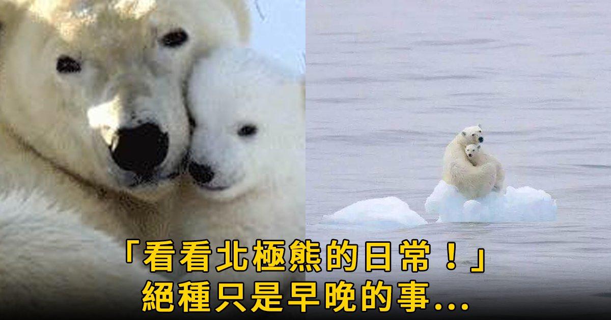 e69caae591bde5908d 1 7.png?resize=1200,630 - 攝影師鏡頭下的北極熊悲慘日常:「約2030年,人類會親眼看到北極熊的滅絕!」