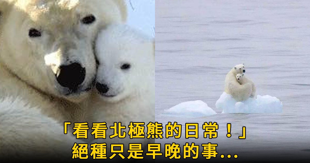 e69caae591bde5908d 1 7.png?resize=412,232 - 攝影師鏡頭下的北極熊悲慘日常:「約2030年,人類會親眼看到北極熊的滅絕!」